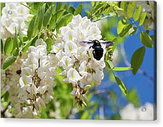 Wisteria With June Bug Acrylic Print