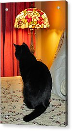 Witches Cat Acrylic Print by Art Dingo