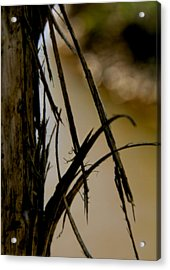 With Wings Unfurling Acrylic Print by Odd Jeppesen