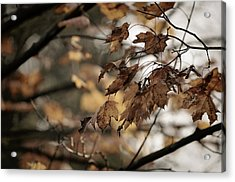 Withered Leaves Acrylic Print