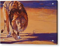 Within Striking Distance - African Lion Acrylic Print by Shawn Shea