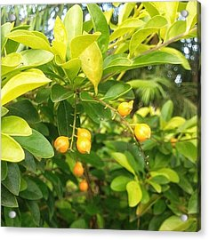 Without Filters #nature #fruits #nature Acrylic Print