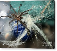 Wolf Spider Eating Acrylic Print by Art Hill Studios