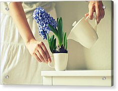 Woman Watering Blue Hyacinth Acrylic Print by Photo by Ira Heuvelman-Dobrolyubova