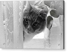 Wondering. Kitty Time Acrylic Print by Jenny Rainbow