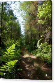 Wondrous Path Acrylic Print by Yves Pelletier