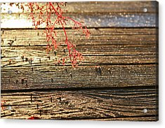 Wood Deck Red Sprig Acrylic Print