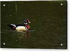 Acrylic Print featuring the photograph Wood Duck by Josef Pittner