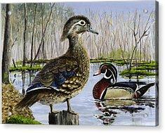 Wood Duck Acrylic Print by Paul Gardner