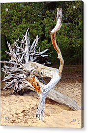 Wood Sculpture Acrylic Print by Joan Meyland