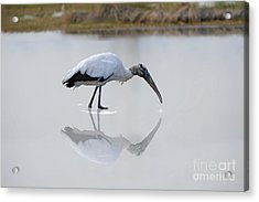 Acrylic Print featuring the photograph Wood Stork Eating by Dan Friend