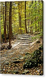 Wooded Stairway Acrylic Print