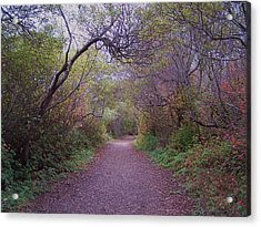 Wooded Trail Acrylic Print by Christine Drake