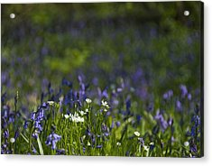 Woodland Flowers Acrylic Print by Trevor Chriss