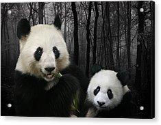 Woodland Giant Pandas Acrylic Print by Julie L Hoddinott