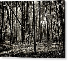 Woodland Acrylic Print by Lourry Legarde