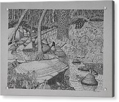 Acrylic Print featuring the drawing Woodland Stream by Daniel Reed