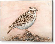 Woodlark In The Day-break Acrylic Print by Deak Attila