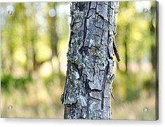 Woods At Dusk Acrylic Print
