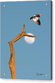 Woody Flying By The Moon Acrylic Print