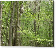 Woody The Barred Owl Mi Acrylic Print by Karen King