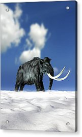 Woolly Mammoth, Artwork Acrylic Print by Victor Habbick Visions