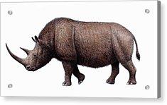 Woolly Rhinoceros, Artwork Acrylic Print by Mauricio Anton