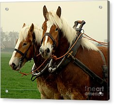 Acrylic Print featuring the photograph Work Horses by Lainie Wrightson