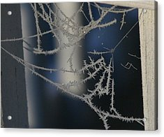 Work Of Spider And Winter Acrylic Print by Paula Tohline Calhoun