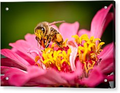 Worker Bee Acrylic Print
