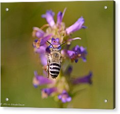 Acrylic Print featuring the photograph Worker Bee by Mitch Shindelbower