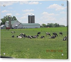 Working Milk Farm Acrylic Print by Tina M Wenger