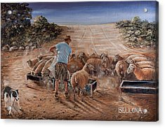 Working Sheep In South-africa Acrylic Print by Wilma Kleinhans