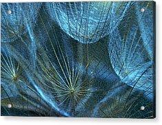 Woven Webs Acrylic Print