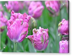 Wrinkled Flowers Acrylic Print