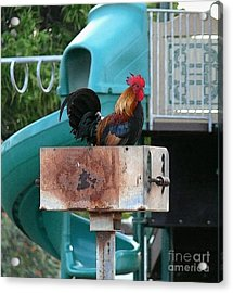 Wrong Playground Mr Rooster Acrylic Print by Terri Thompson