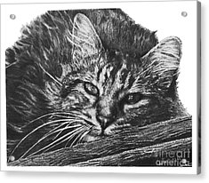 Acrylic Print featuring the drawing Wyatt by Marianne NANA Betts