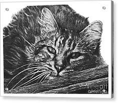 Wyatt Acrylic Print
