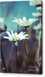 Xposed - S02 Acrylic Print by Variance Collections