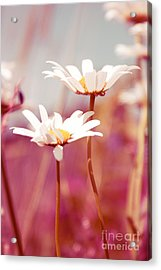 Xposed - S03 Acrylic Print by Variance Collections