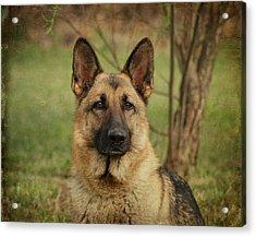 Yahtzee - German Shepherd Acrylic Print by Sandy Keeton