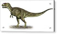 Yangchuanosaurus Shangiouensis Acrylic Print by Sergey Krasovskiy