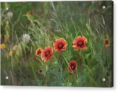Acrylic Print featuring the photograph Yawn...more Flowers by John Crothers