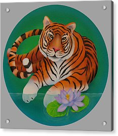 Year Of The Tiger Acrylic Print by Marcia  Perry
