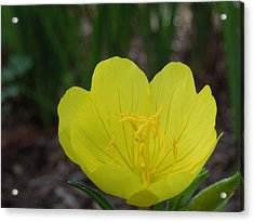 Yellow And Bright Acrylic Print by Chad and Stacey Hall