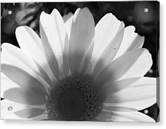 Yellow And White Flower Acrylic Print