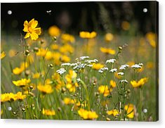 Yellow And White Acrylic Print by Ron Smith
