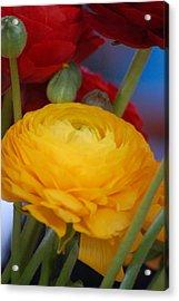 Yellow Beauty Acrylic Print by Dickon Thompson