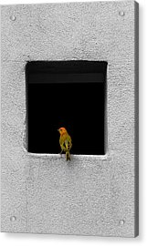 Yellow Birdie On The Window Sill Acrylic Print