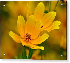 Acrylic Print featuring the photograph Yellow Blaze by Marty Koch